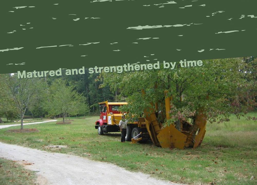 Native Tree, LLC - Transplanting & Moving Trees: Atlanta